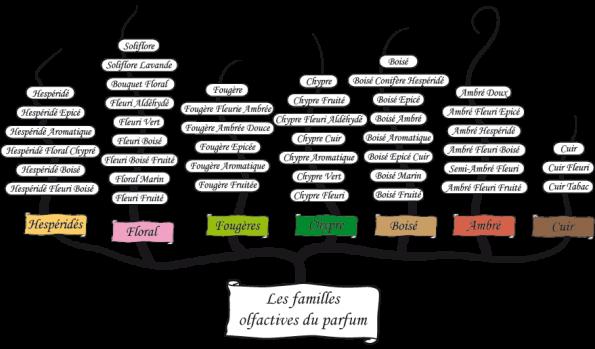 dt_parfum_bloc2_arbre